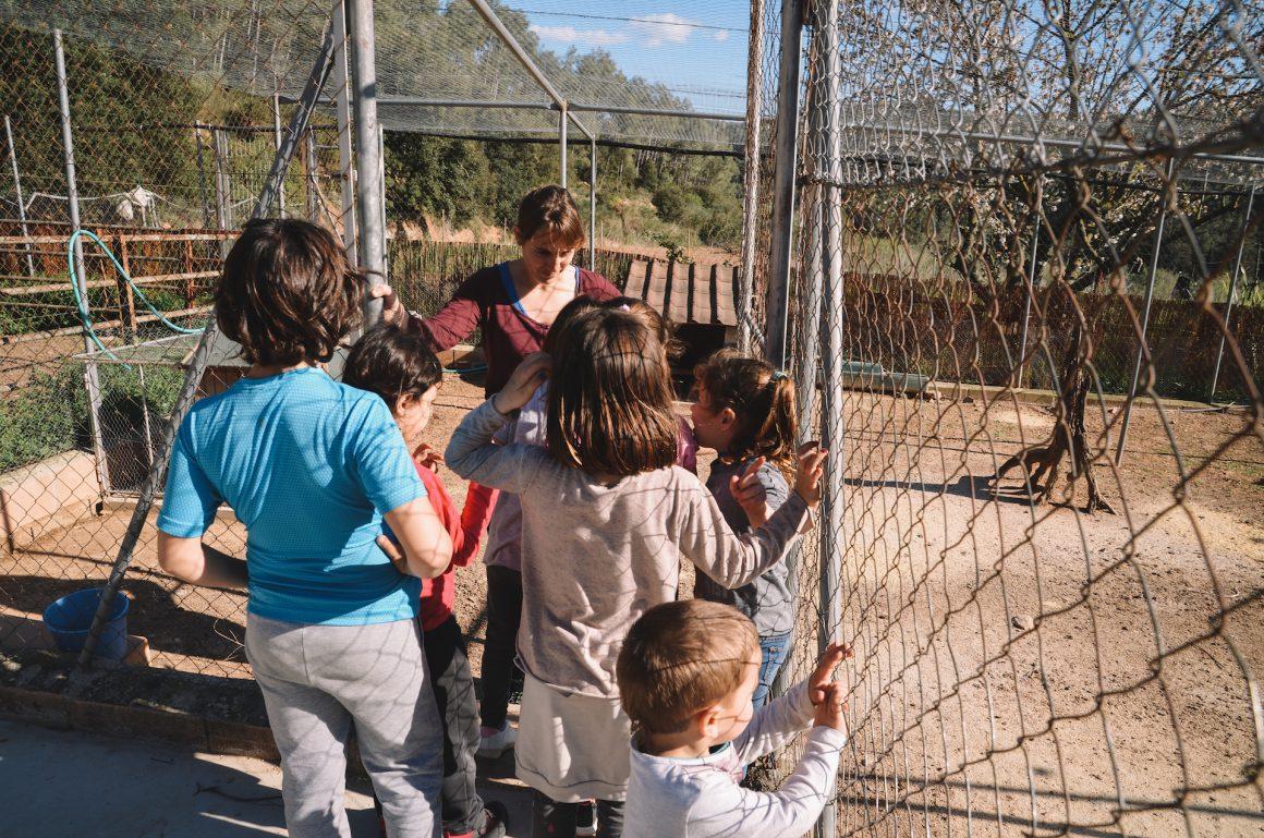 Nens escola visitant la Granja