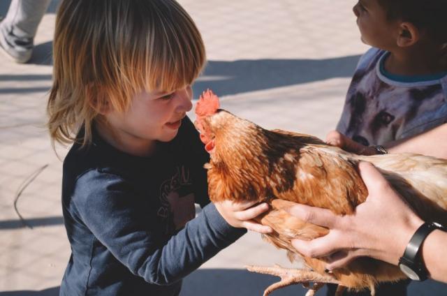 Petit i gallina Can Mas Casa de colonies
