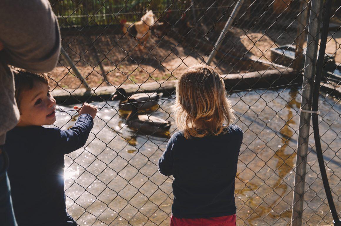 Nens ecola mirant ànecs