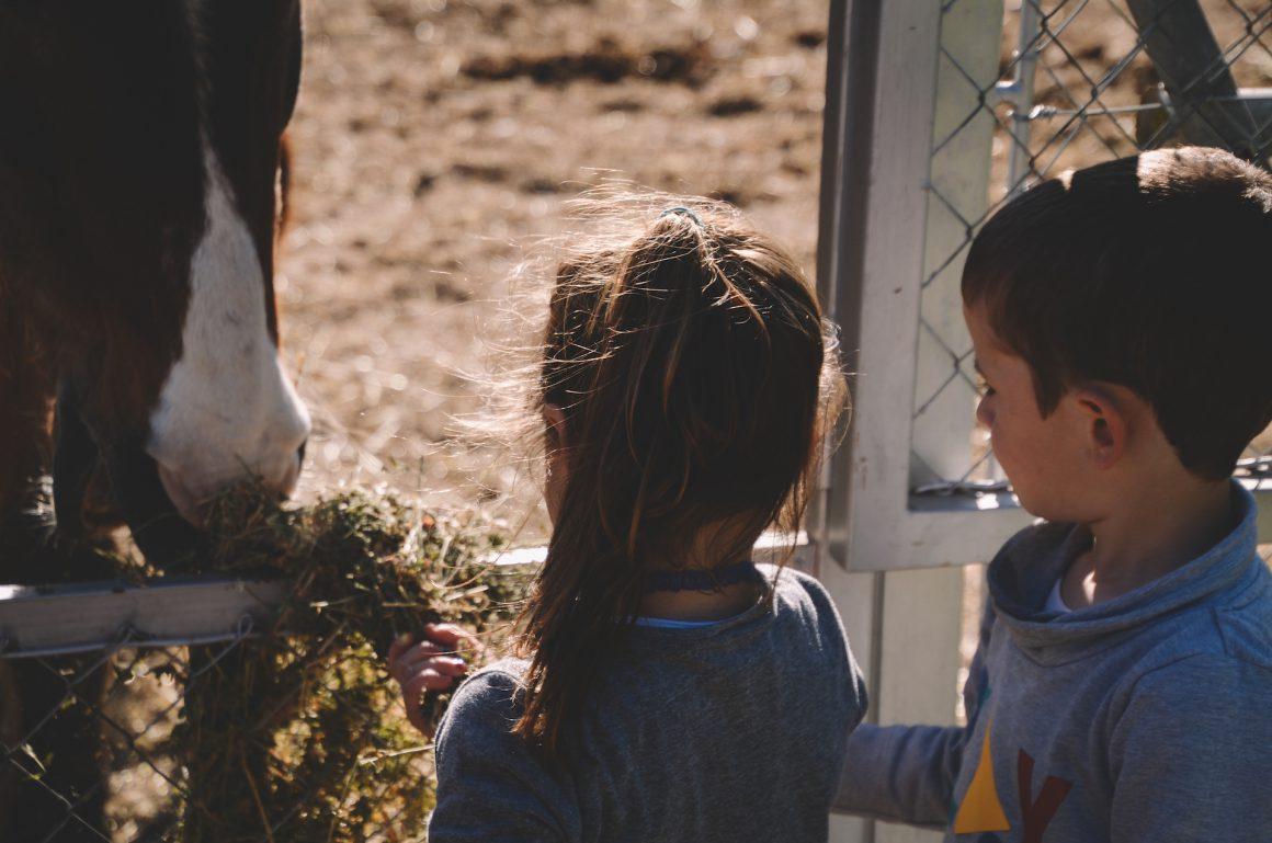 Petits escola i cavall granja